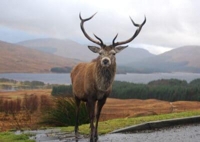 natur udveksling skotland